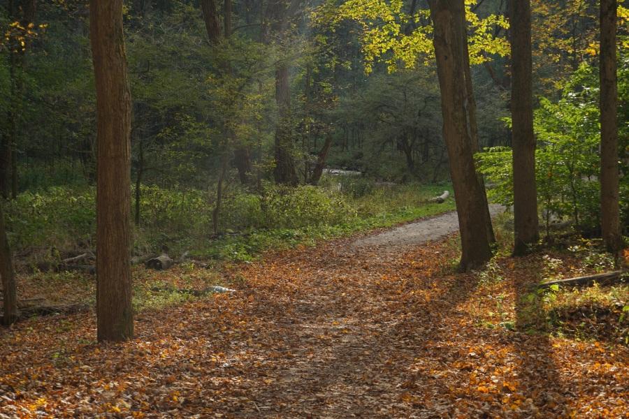 Autumn Embers 2
