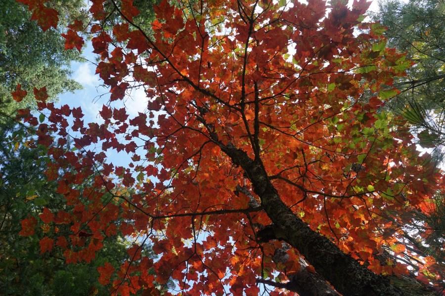 Autumn Embers 3