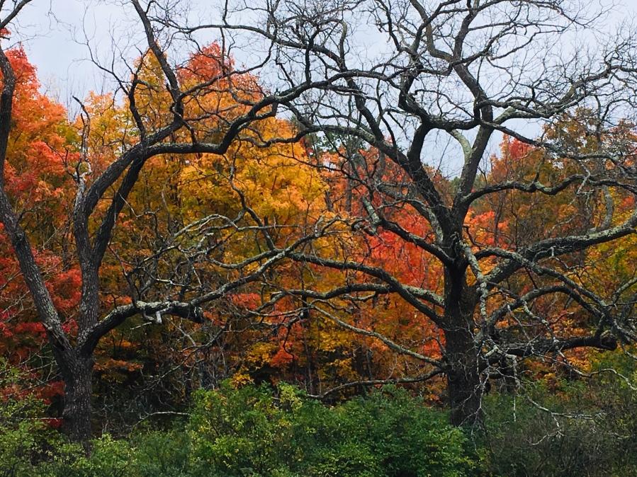 Trees of Michigan 1