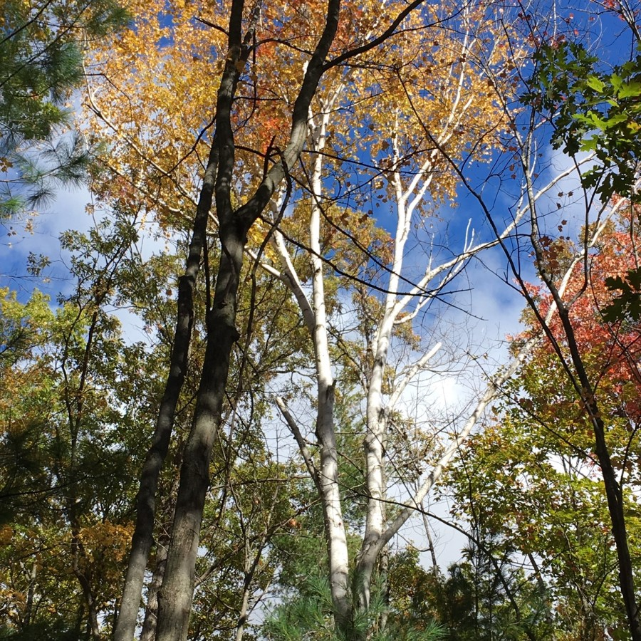 trees of michigan 2
